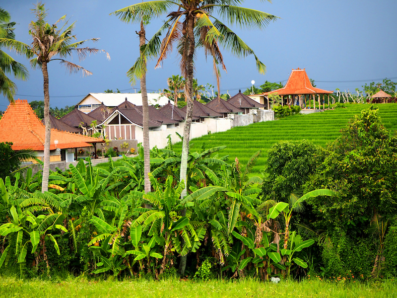 Rice Paddies in Canggu | Source: lookmal.com (Shutterstock)
